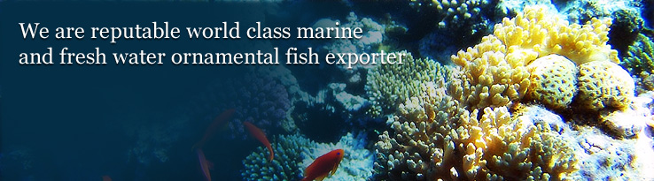 We are reputable world class marine and fresh water ornamental fish exporter